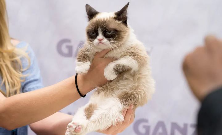 There's A New Grumpy Cat That's Even Grumpier Than The Original!